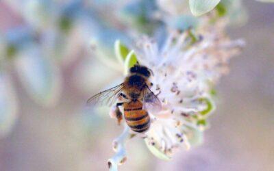 Πως να κρατήσετε μακριά τις μέλισσες από την πισίνα σας